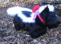 Halloween Humiliation for Your Pet:   I Look Better Than I Smell.   Pepe Le Pew has nothing on this skunk dog.