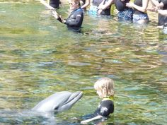 Discovery Cove, FL Swim with the dolphins, and a wonderful day long activity.  It will break the bank, save up!