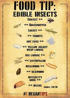 Edible Insects Nutritional Value and Tasty Recipes Edible Insects Nutritional Value and Tasty Recipes,tipps Crucial Survival Tactic That Can Save Your Life When Catastrophe Hits Skills Survival Life Hacks, Survival Supplies, Survival Food, Outdoor Survival, Survival Prepping, Survival Skills, Survival Stuff, Survival Equipment, Camping Survival