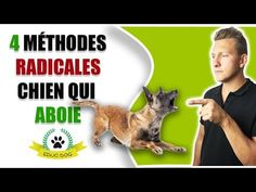 ❌ CHIEN QUI ABOIE COMMENT FAIRE ? - YouTube Cesar Millan, Education Canine, Bindi, Basset Hound, Cavalier King Charles, Shiba, Border Collie, Woody, Dog Training