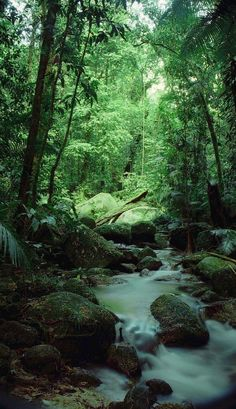 Daintree Rainforest: Hot and wet year-round Tall trees form a canopy which cover the rainforest Lots of wildlife Poor soil