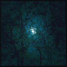 The #moon through #trees