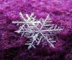 snowflakes on purple wool