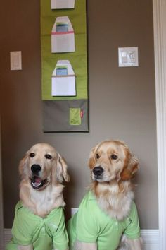 Meet Golden Retrievers Nemo and Salty. These two hard working Golden Retrievers are both committed to spreading the word of the SmartReach cell phone  pouch. The Smart Reach cell phone pouch attaches to the side of your bed it is the perfect place to store your cell phone, eye glasses, or remote control.