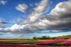 Dutch Landscape II by Watze D. de Haan