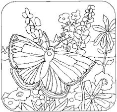 gallery for coloring pages flowers and butterflies for adults