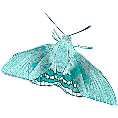 papillon-de-nuit-sur-yucca-3.png ❤ liked on Polyvore featuring butterflies