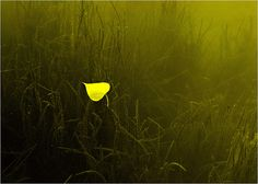 Best Photo of the Day in #Emphoka by Vanilla_jo [Nikon Coolpix P500] - http://flic.kr/p/eYN1nD