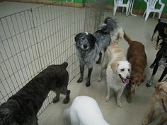 Korral Dog Training & Supply Center offers the best Sarasota dog training and boarding services. We treat your dogs as one of our own! Dog Training Classes, Pet Store, Your Dog, Pets, Animals, Animaux, Animales, Animal, Dieren