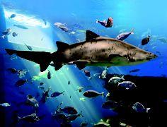 Gran Azul, tanque de tiburones más profundo de Europa - Palma Aquarium