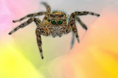 Eye of the Spider: Hypnotizing Macro Photos of Exotic Spiders Staring Directly into Your Mind