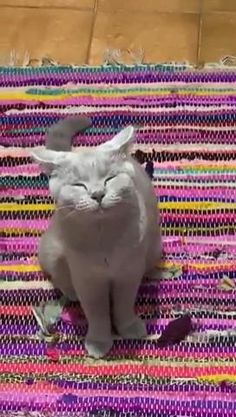 Funny Cute Cats, Cute Funny Animals, Cute Baby Animals, Animals And Pets, Cute Animal Videos, Funny Animal Pictures, Baby Cats, Cats And Kittens, Cute Puppies