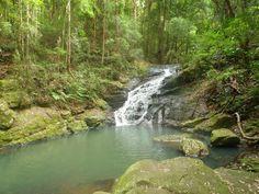 Kondalila falls, Montville, Sunshine Coast Hinterland (Queensland, Australia) Travel blog: http://varietyisthebeautyoflife.blogspot.com.au/