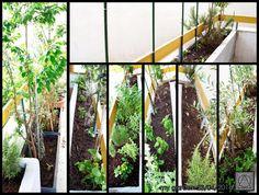 my garden 23/4/2016