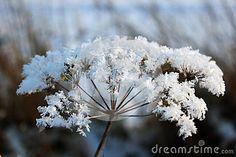 It is a beautiful flower that taken in the field.