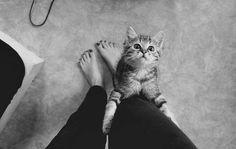 Little black nails leggins kittie