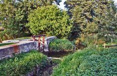 Oleśnica na prawym brzegu potoku Olesnickiego Plants, Plant, Planets