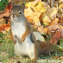 Ever Wonder How Squirrels Hide Their Food Stashes?
