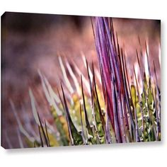 Mark Ross Agave Wrapped Canvas Art, Size: 14 x 18, Green