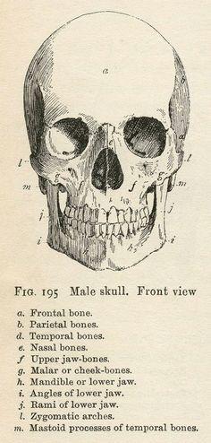 vintage anatomy | Tumblr