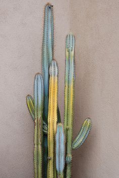 sweet, other worldly colors on this cactus. i could see a really dark blue and purple fitting in with these colors.