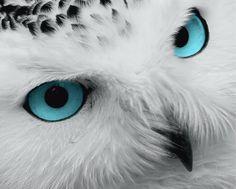 Light Blue Eyes, Yellow Eyes, Owl Background, Raptor Bird Of Prey, Owl Species, Grey Wall Art, Owl Eyes, Owl Pictures, Beautiful Owl