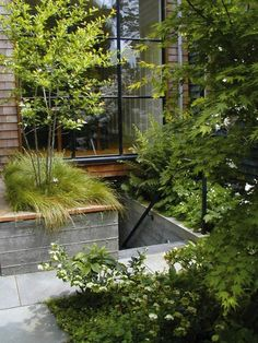 Scott Lewis Turns A Small SF Backyard Into an Urban Oasis