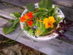 A Summer leaf salad from Cardigan Bay