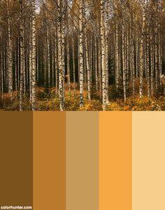 Birch Forest Color Scheme