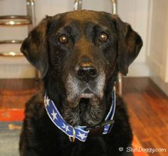 Maggie faces osteosarcoma - part 2 http://slimdoggy.com/maggie-faces-osteosarcoma-part-2/