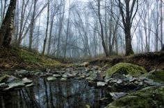 Tranqulity of the misty forest by Alexander Arntsen on 500px