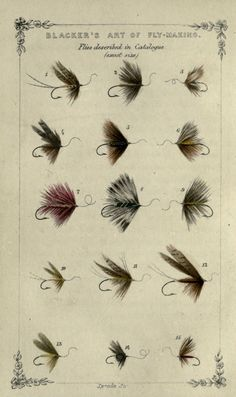 Plate of 15 Trout flies, William Blacker - Art of Fly Making 1855