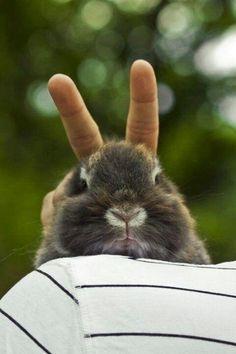 funny bunnies   Funny bunny   Funny Animals