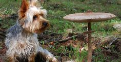 Medicinal Mushrooms For Cancer In Dogs