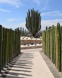 Resultado de imagen para jardines deserticos