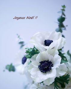 アネモネ Anemone flower