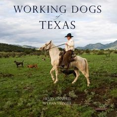 Working Dogs of Texas- Wyman Meinzer Texas Treasures, Texas Photography, Real Cowboys, Loving Texas, Texas History, Cowboy Art, Hound Dog, Working Dogs, Horses