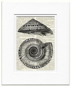 solium shell print by FauxKiss on Etsy