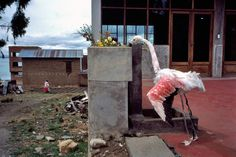 Alex Webb BOLIVIA. Huataja. 1998.
