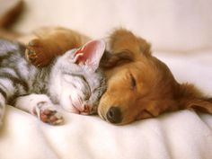 Cats and dogs really can love each other! :)