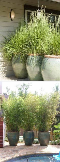 #4. Place giant plant pots close together to create privacy in your yard.