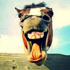 Ha, ha ha, vê só esta que tem imensa piada!    Entre e descubra estas divertidísimas piadas e piadinhas, para você e para todos! Compartilhe com seus amigos e seleccione seus favoritos.    Sugira seu piada e agregá-la-emos de imediato. A rir! #esta #imensa #para #para ti e para todos nos #piada #piadas #piadas e piadinhas #piadinhas #todos