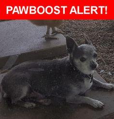 Please spread the word! Smokey was last seen in Santa Fe Springs, CA 90670.    Nearest Address: Near Parkmead St & Jersey Ave