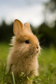 oh yup i m getting a pet bunny pets animals pinterest