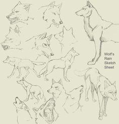 Wolf's Rain sketch sheetby ~RitsukoAkagi