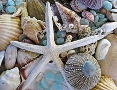 Sea Treasure Photograph by Colleen Kammerer