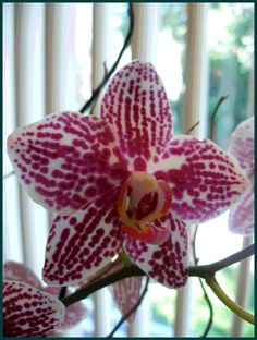gorgeous orchid