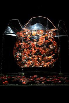 アートアクアリウム#3 Art Aquarium#Japan