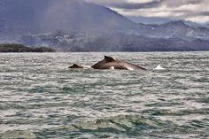 Avistamiento de ballenas en Parque Nacional Marino Ballena. Costa Rica