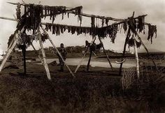 Above we show a moving photo of Eskimos Alaska Drying Whale Meat. It was made in 1929 by Edward S. Curtis.    The illustration documents Eskimos Alaska Drying Whale Meat.    We have compiled this collection of artwork mainly to serve as a vital educational resource. Contact curator@old-picture.com.